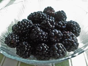 Big, purple, plump, juicy blackberries