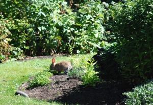 A bunny in a garden
