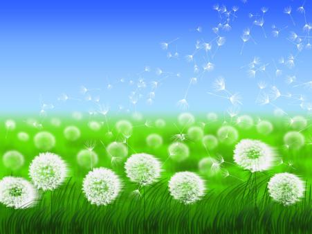 Wishflowers