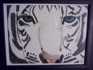 White Tiger, colored pencil, paper SOLD