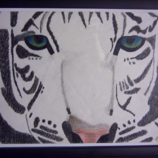 White Tiger, colored pencil, paper SOLD